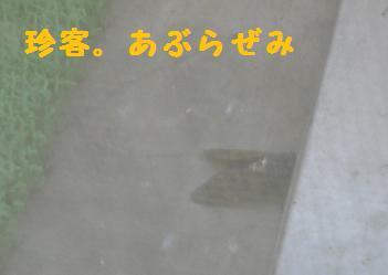 P1040882.jpg