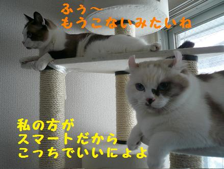 P1050067.jpg