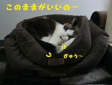 P1050546.jpg