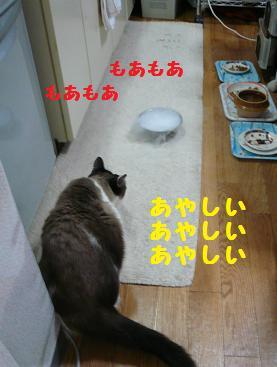 P1060461.jpg