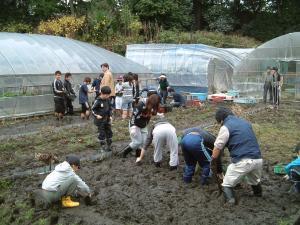 2009クワイの収穫