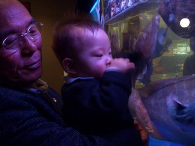 お魚さんをみているTsubaki
