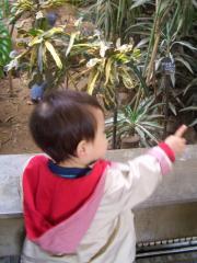熱帯の鳥さんをみるTsubaki
