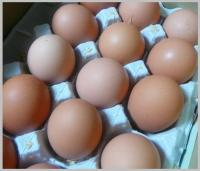たまご家さんの卵