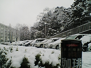 glove 炭火焙煎 珈琲 image2