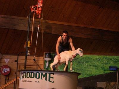 farm show2