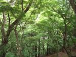 0519oyama.jpg