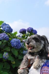 紫陽花とくるみ