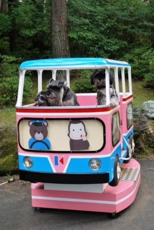 バス(シュナ野郎くん&舞羽くん&くるみ)