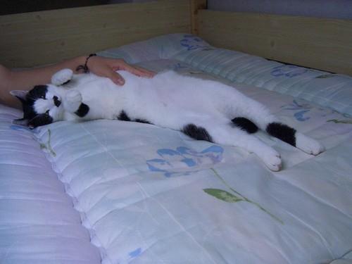 ベッドで3