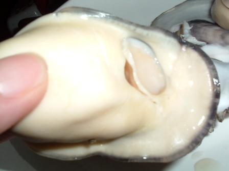 大きな牡蠣