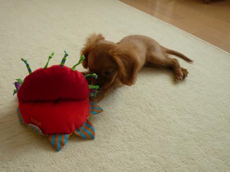 おもちゃの方が大きいんじゃない?