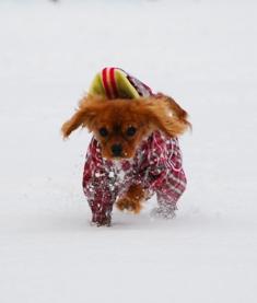 雪をけちらす1