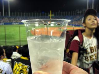 200810_jingo-sato.jpg