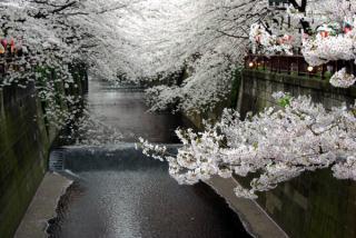 20090405_meguro-sakura01.jpg