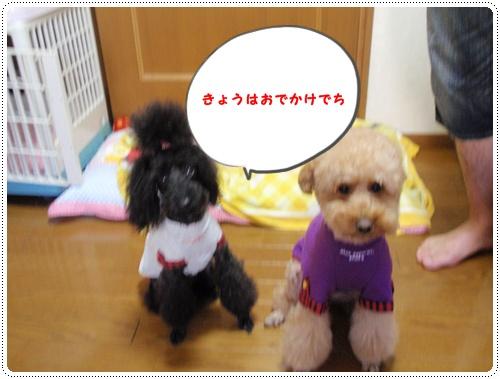 001_20091005204653.jpg