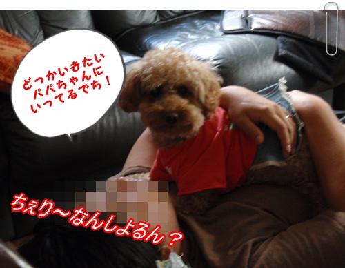006_20090830210415.jpg