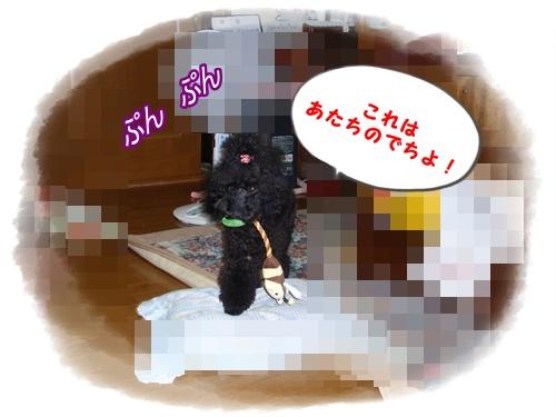 015_20090823162842.jpg