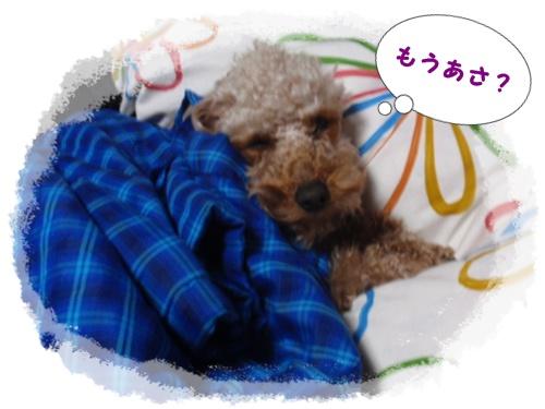 001 寝起きのちぇりー