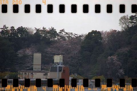 sakuraa2009.jpg