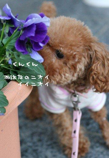 お花のニオイはおいしそう♪