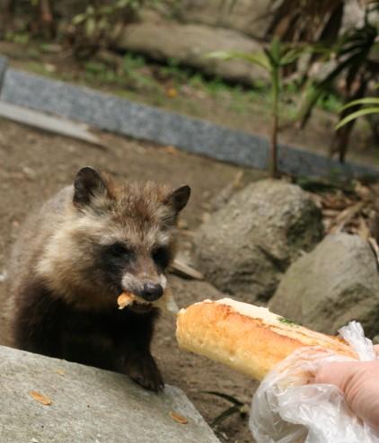 パン食べる?