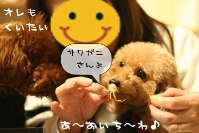 バリバリ食べちゃった…( ̄▽ ̄;) )