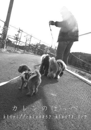 みんなでお散歩って 嬉しいね。