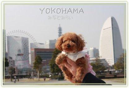 横浜お散歩 たっぷり歩いたね。