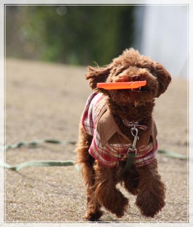フリスビー犬?