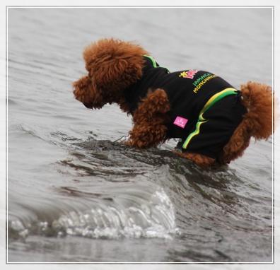 泳いじゃう?