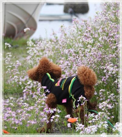 お花がいっぱいだね