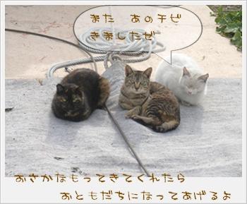 ネコちゃんのテリトリーだよね