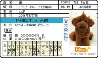 蓮の免許証
