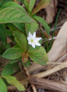 090613平標(花)5