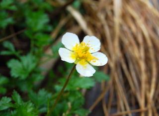 090613平標(花)12