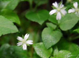090613平標(花)14
