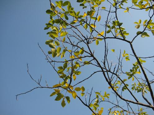 08年12月広州珠江公園3