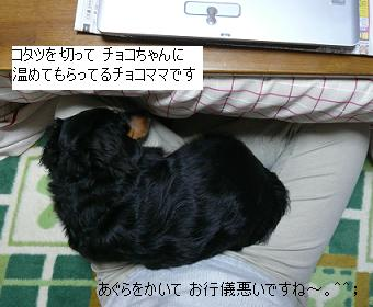 P1090020_1.jpg