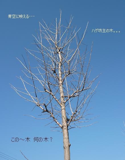 P1090454_ki1.jpg