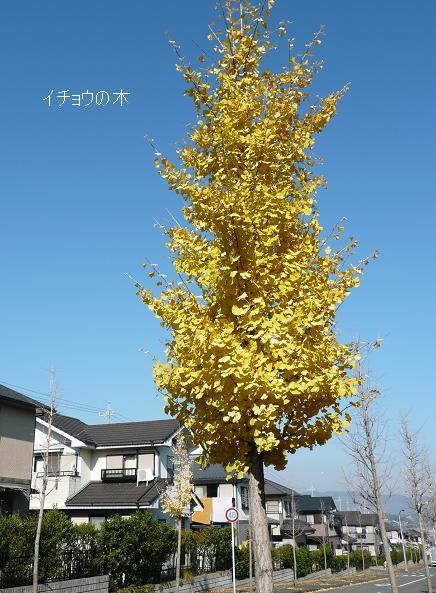P1090460_ki2.jpg