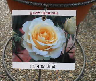 P1090569_waon.jpg