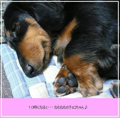 P1090895_nn66.jpg