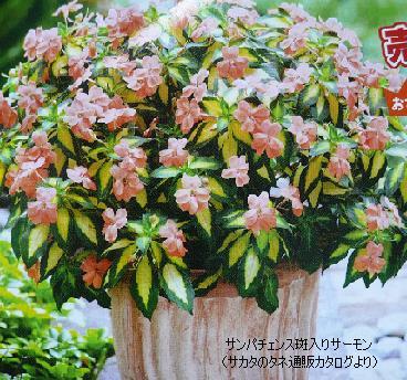 P1100539_ss.jpg