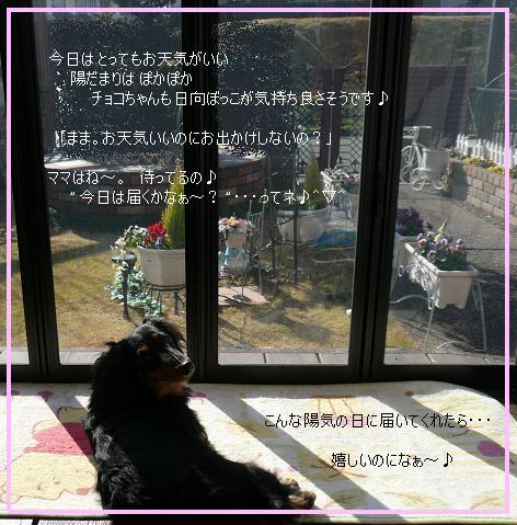 P1100761_cho.jpg