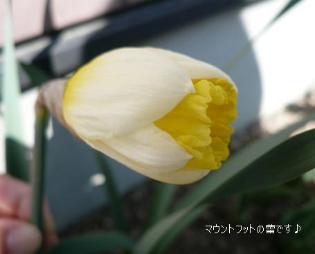 P1120708_m1.jpg