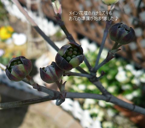P1120775_hana.jpg