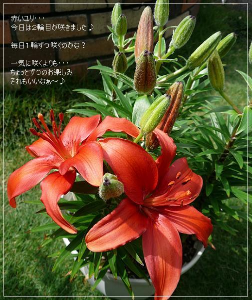 P1150013_yuri.jpg