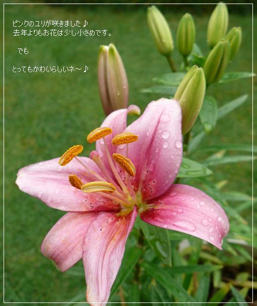 P1150109_yuri.jpg