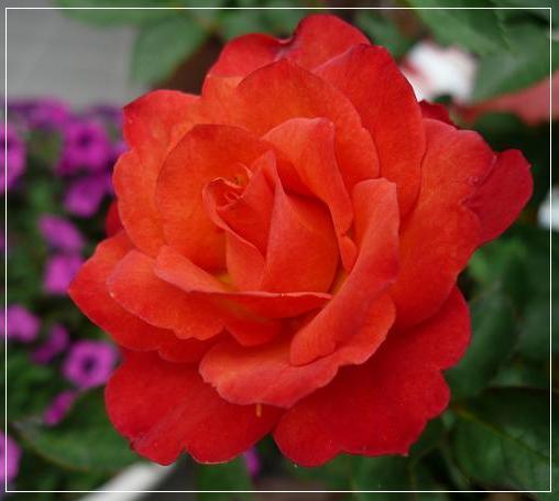 P1150178_red1.jpg